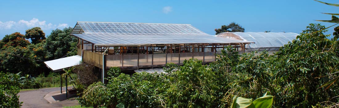 Kona Premium Coffee farm